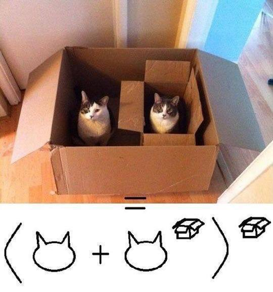 Cat maths 😹 https://t.co/to1PUVgWr7