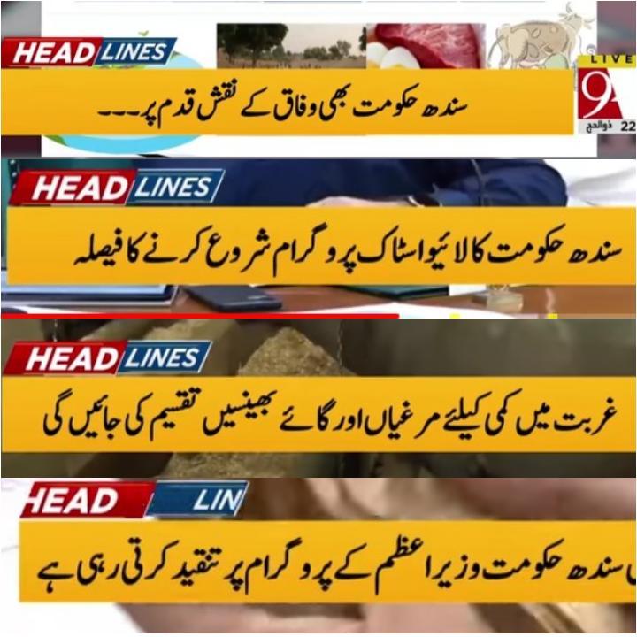 بریکنگ نیوز :  سندھ حکومت وزیراعظم عمران خان کے نقشِ قدم پر 👇 سندھ حکومت نے 55 کروڑ کی لاگت سے لائیو سٹاک پروگرام شروع کرنا کا اعلان کر دیا اور کہا کہ غربت میں کے لیے گائے اور بھینسیں دیں گے یہ مخالفین جو عمران خان نے کہا اور شروع کیا تو تنقید اور جگت بازی کرتی تھی  #PTI #PPP https://t.co/JP0Ouplb2C