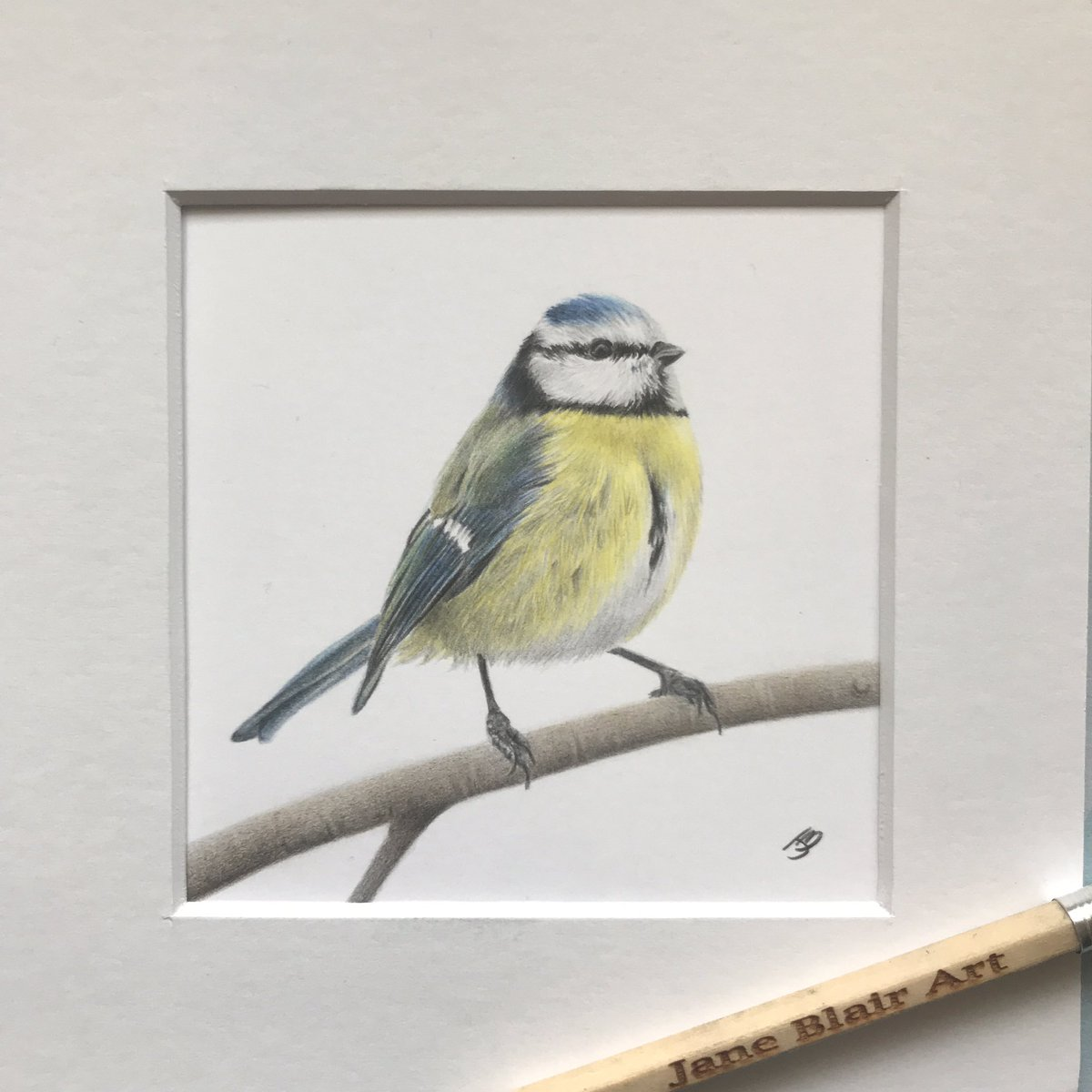 """Newest art for sale - little blue tit drawn in colour pencil. Mounted, ready to fit 6""""x6"""" frame. Own some original art! Looking for offers, prints to follow ✏️✏️✏️ #UKGiftHour #artforsale #QueenOf #ArtistOnTwitter #smeuk #shopindie #giftideas #crafturday #smallbizsatuk"""