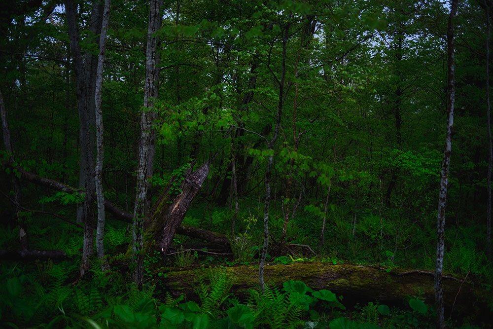 6月の現像めっちゃ多いし。 #写真撮ってる人と繫がりたい  #写真好きな人と繫がりたい  #写真で伝えたい私の世界  #森の写真 https://t.co/kFgWJCz8KF