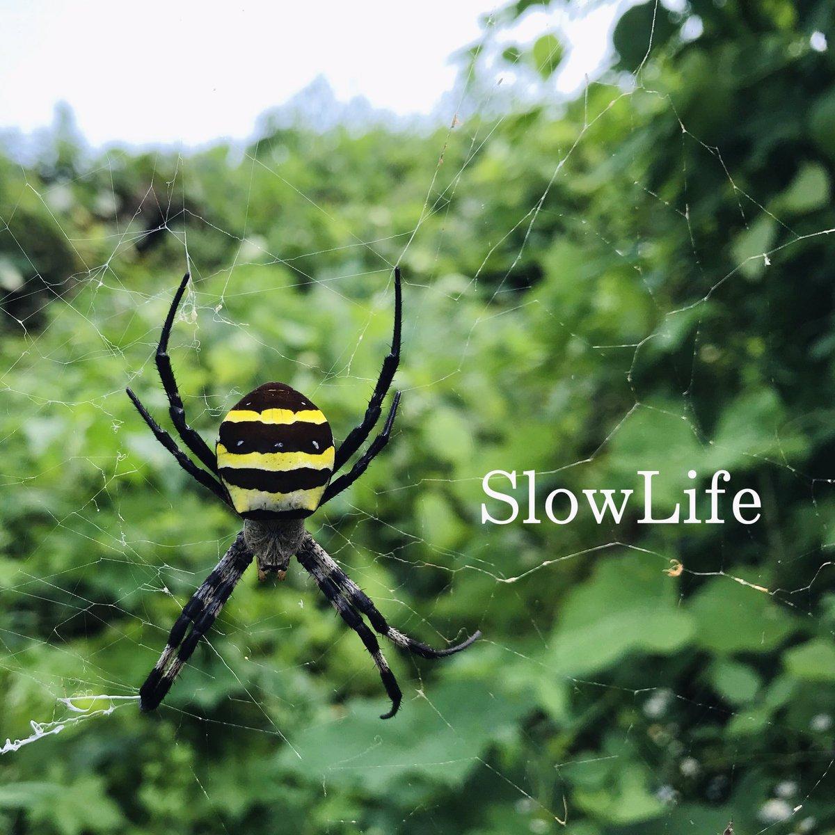 SlowLife (@SlowLife51) | Twitter