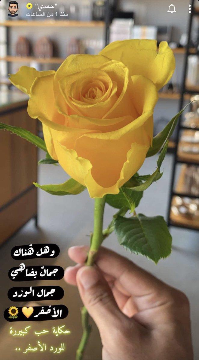 كلام عن الورد قصير 30 رسالة