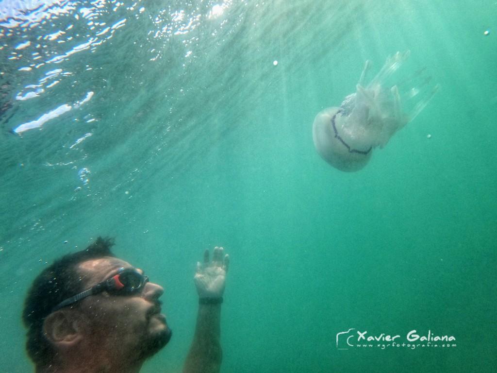 Un selfie amb companyia especial!  #openwaterswimming #ows #esport #natacio #aigüesobertes #aguasabiertas #petiquipeti #gopro #goprophotography #goprophoto #jellyfish #medusa #rhizostomapulmo https://t.co/SM819IiMCO
