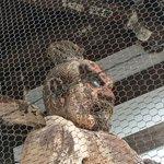 「東大門の阿形仁王様」の身体の部分に大量のミツバチが巣を作っていた!