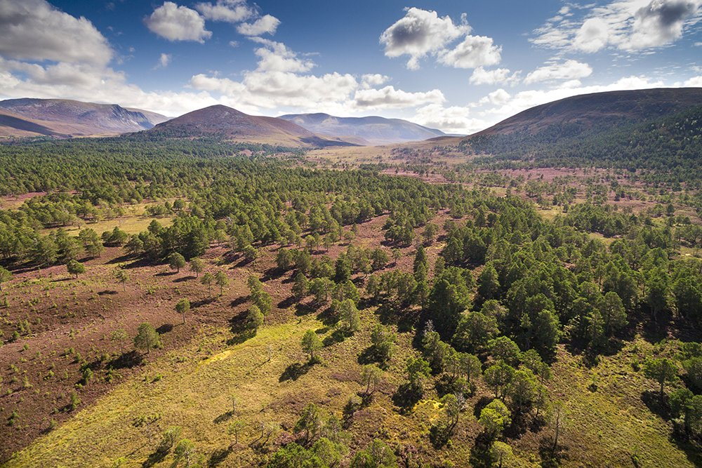 Just this last week Ive heard of another 3 Scottish estates totalling 45,000 acres, changing direction towards nature recovery. #ThinkLikeAMountain