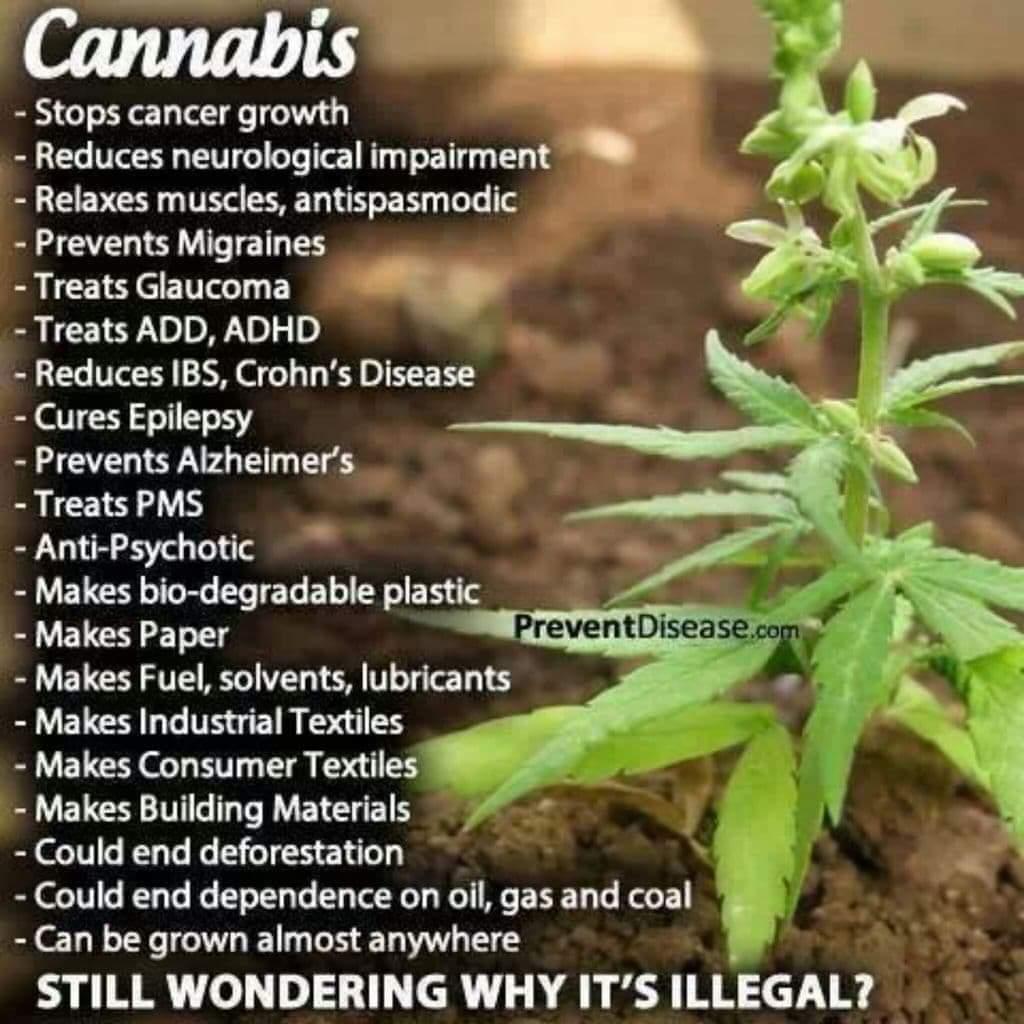 Good morning everyone, maybe Kamala can get Joe to change his mind on legalizing Marijuana? #FreeTheWeed