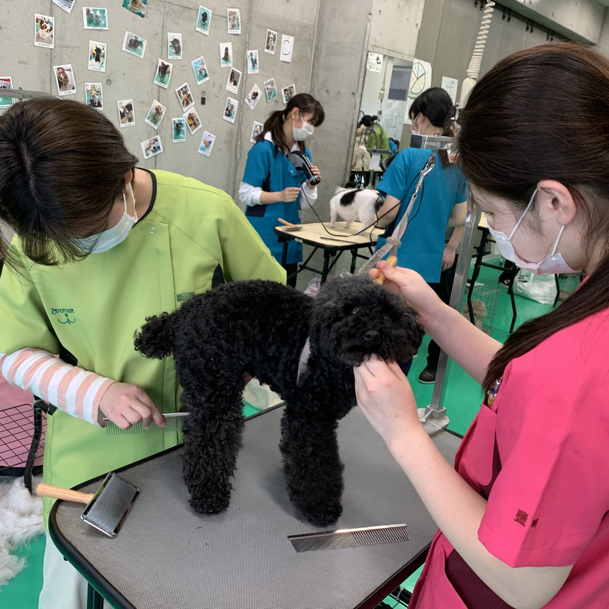 ブレーメン 専門 神戸 学校 動物
