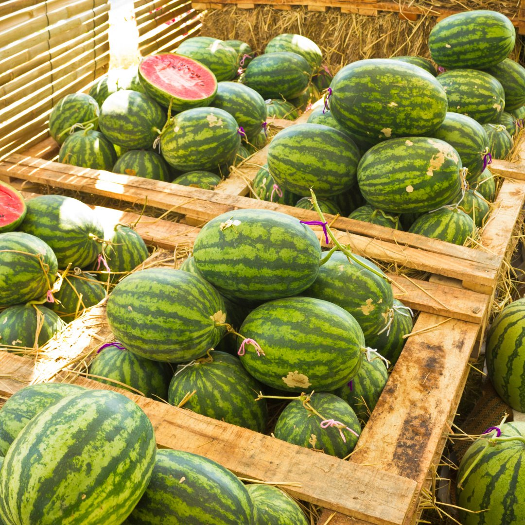 How many acres in the state of Maryland are dedicated to growing watermelon? #MyMdFarmers #Watermelon 🍉 🍉 🍉 🍉 🍉 🍉  A. 4,800 acres B. 3,700 acres C. 2,600 acres D. 1,500 acres   Answer: https://t.co/CA6cc9Bx4t https://t.co/p57it5Q1E2