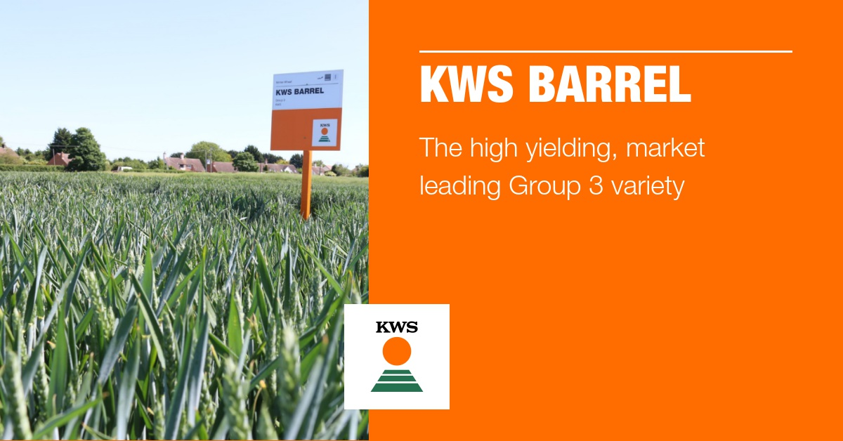 """We had a lot of cases this past trading year where the quality of #KWSBarrel was good enough that we were able to upgrade """"feed"""" wheat contracts for growers and secure them a welcome milling spec premium. #GrowingInScotland"""