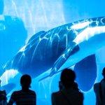 夏の水族館がいかに人気か分かる!青色が凄い癒し効果あり!