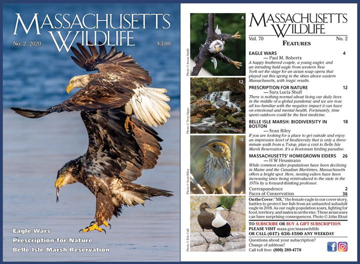 MA Fish & Game magazine - new issue available