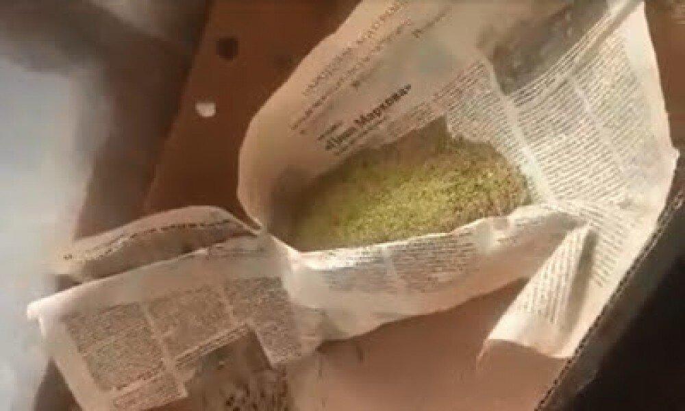 Если в моче найдут коноплю выращивание конопли шкафу