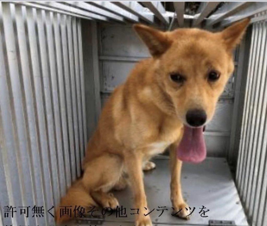 保護 犬 徳島 徳島県:迷子犬届け先一覧(保健所・動物愛護センター・警察署)