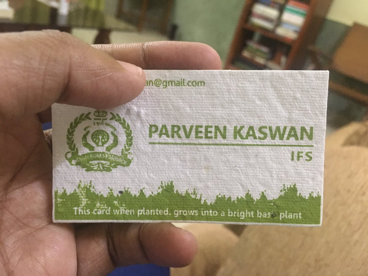 So now anybody coming to my office is getting this. This card when planted grows into a bright basal plant. Thanks @WildLense_India.