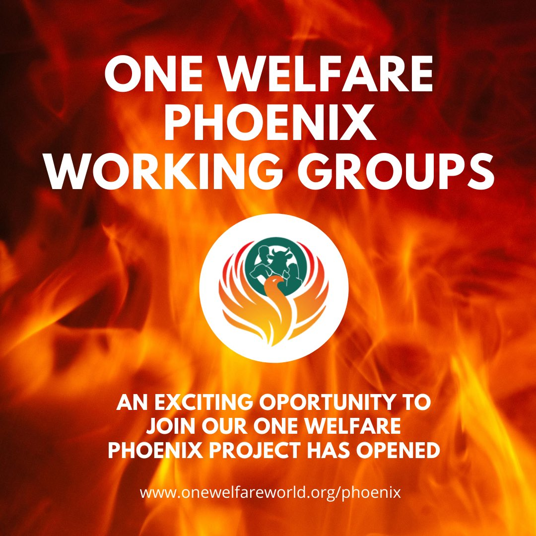 Hot of the press! One Welfare Phoenix advisory board agreed to set up 5 working groups to explore strategic themes on companionship, working animals, animals used in entertainment, farming, research & free roaming. Interested? >> https://t.co/NrVjXZzONb #onewelfare #thelink https://t.co/JhfMKHKjyp