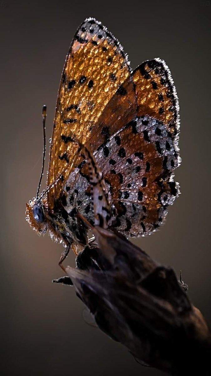 Beautiful Butterfly ❤ #beautiful #butterflies #nature