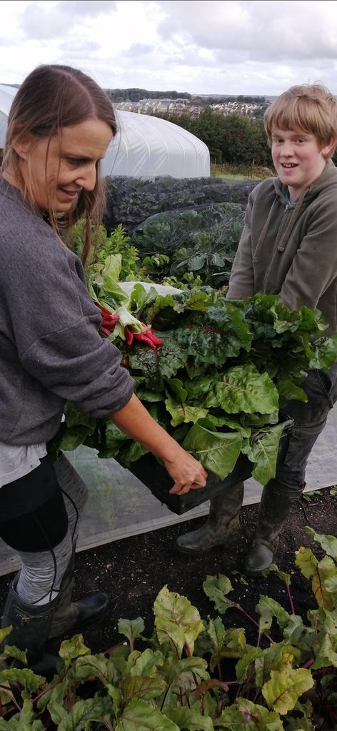 Lots of chard in this week's share of the harvest. Also in the #vegboxes: sweetcorn or fennel, tomatoes, basil, aubergines, pepper, beetroot, French or runner beans, courgettes, cucumber. Plus @ColwithFarm 'Wilja' potatoes https://t.co/1zbYV2Py0X
