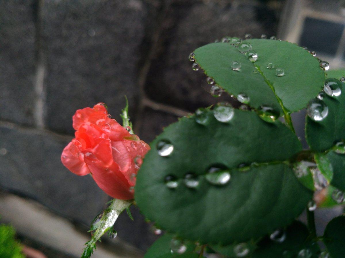 Image for the Tweet beginning: おはようございます😃先週暑さがどこに行ったのか、ひんやり雨降りの飯坂温泉です。気がつけば9月コロナ禍で時間の感覚までズレたようですね。さてさて9月ものんびり頑張っペない! #iizaka #近いよ福島 #鯖湖湯 #飯坂温泉 #福島撮影隊