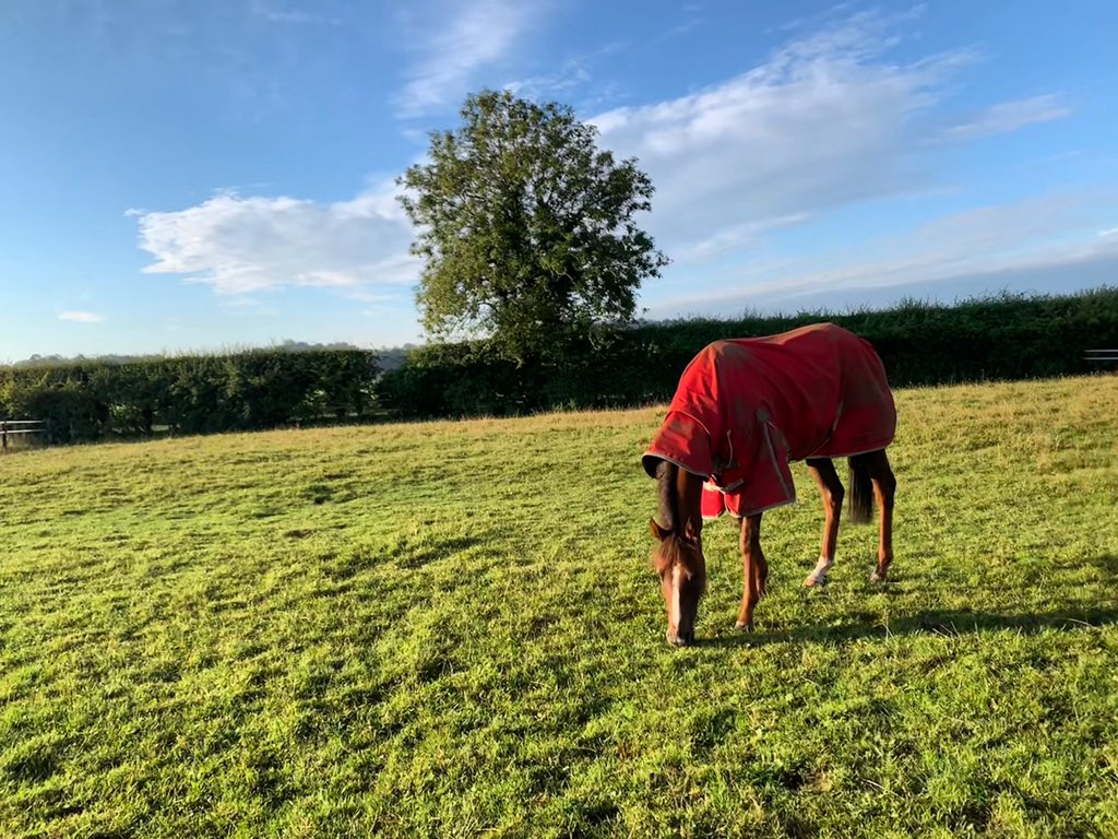 Last night's @HamiltonParkRC winner Kayewhykelly enjoying some time in the field this morning 🌱 @Cliff_stud