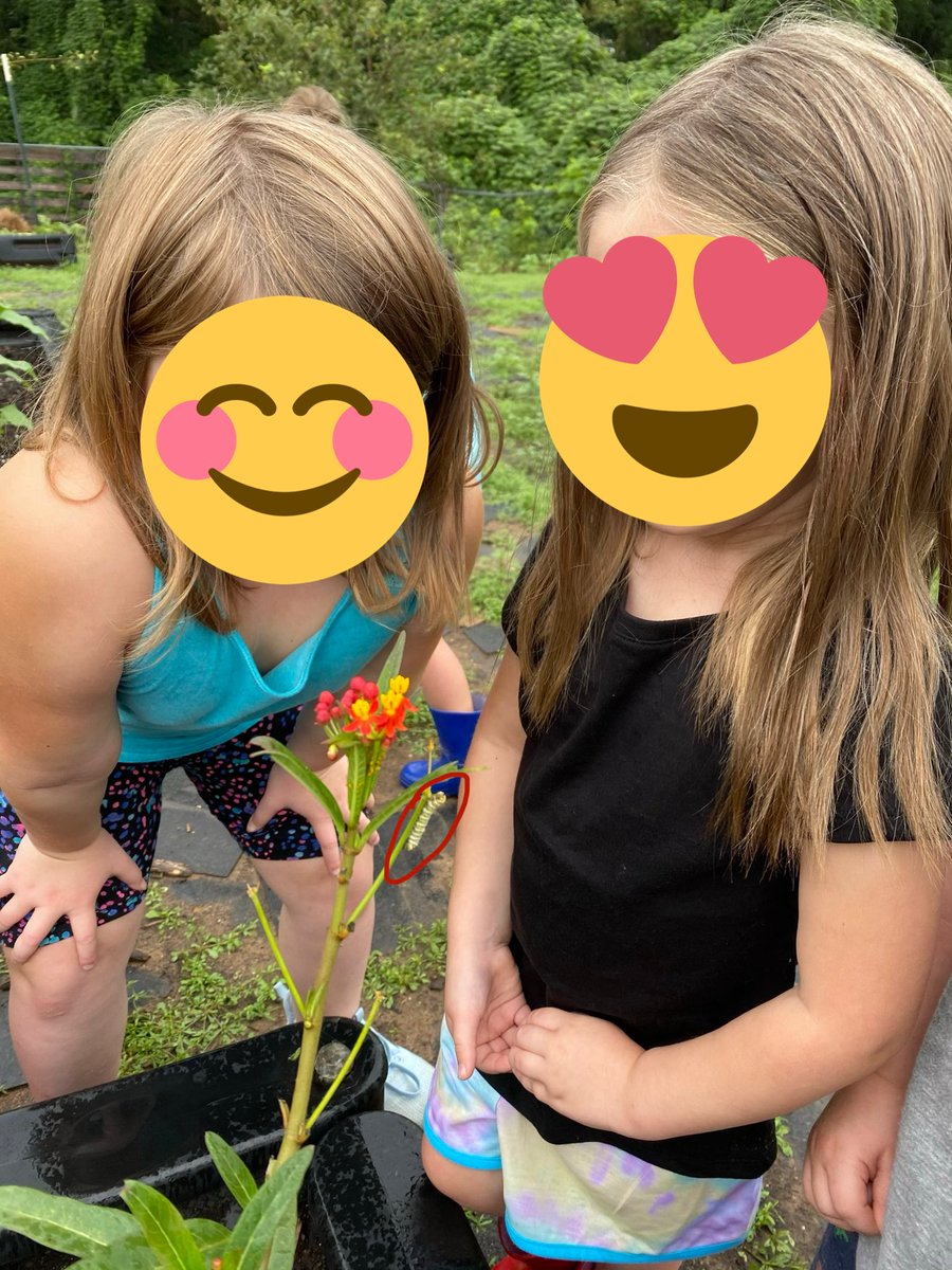 Probably one of my coolest days at work! Students and I observed 7 or 8 #MonarchCaterpillars in the garden. We also read The Life of a Butterfly and explored their life cycle with an activity on the back of the book! It was so cool to see the butterflies from the book IN PERSON! https://t.co/QtGnCF6F3t