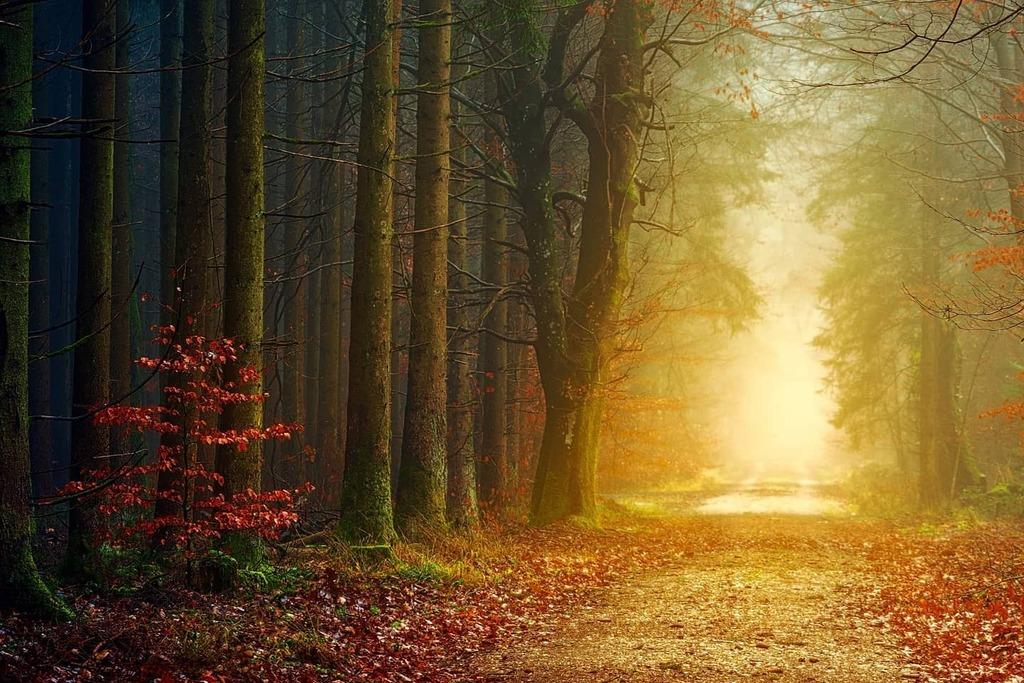 Into The Light via Forest Alley  #topshotoftheday #topshot  #epiclandscapes #epicroad #epicnature #creativecommon #free #freepic #coolfreepix #fog #forest #desktopwallpaper  #desktopimage   https://t.co/2IZn17XDaz https://t.co/BACvtEP2WT