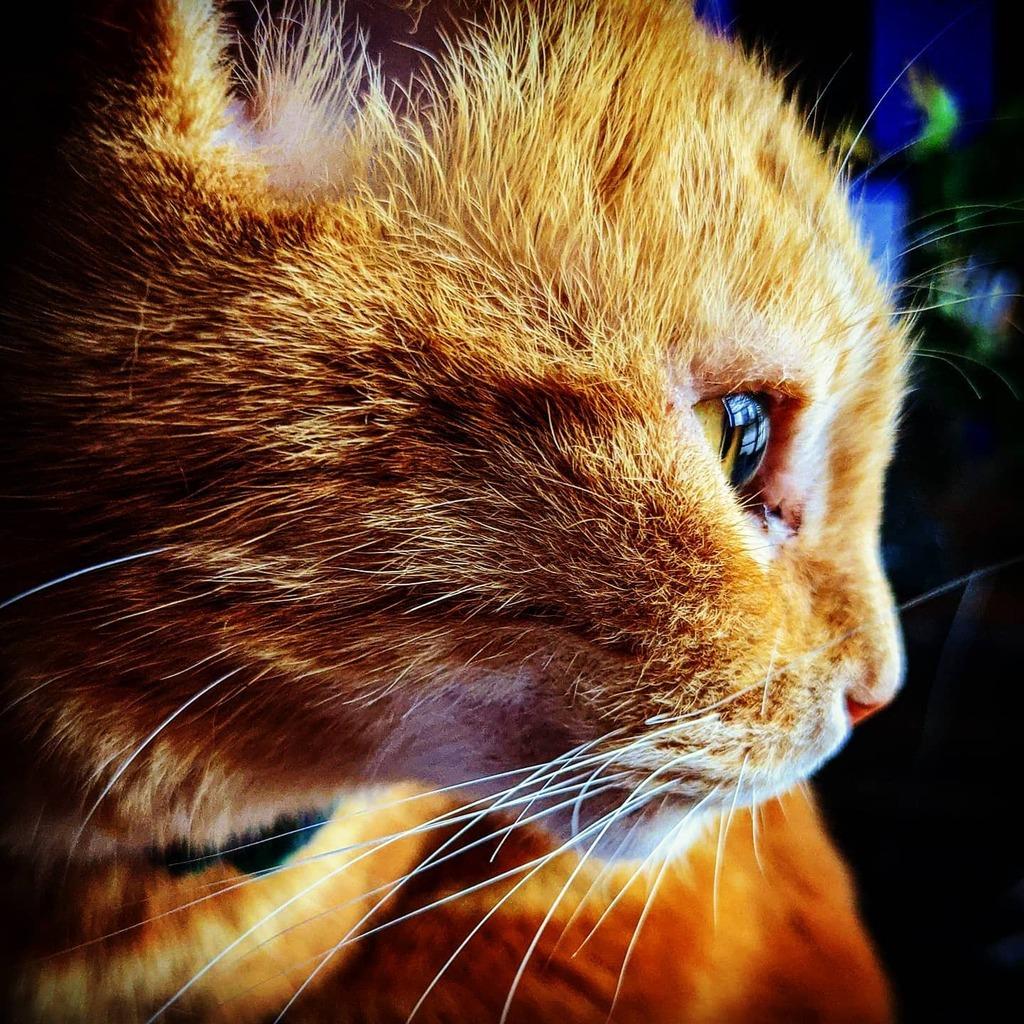 Cat snap of the day. #catsofinstagram https://t.co/lg0HZbiTy0 https://t.co/Upj8O8XUAZ