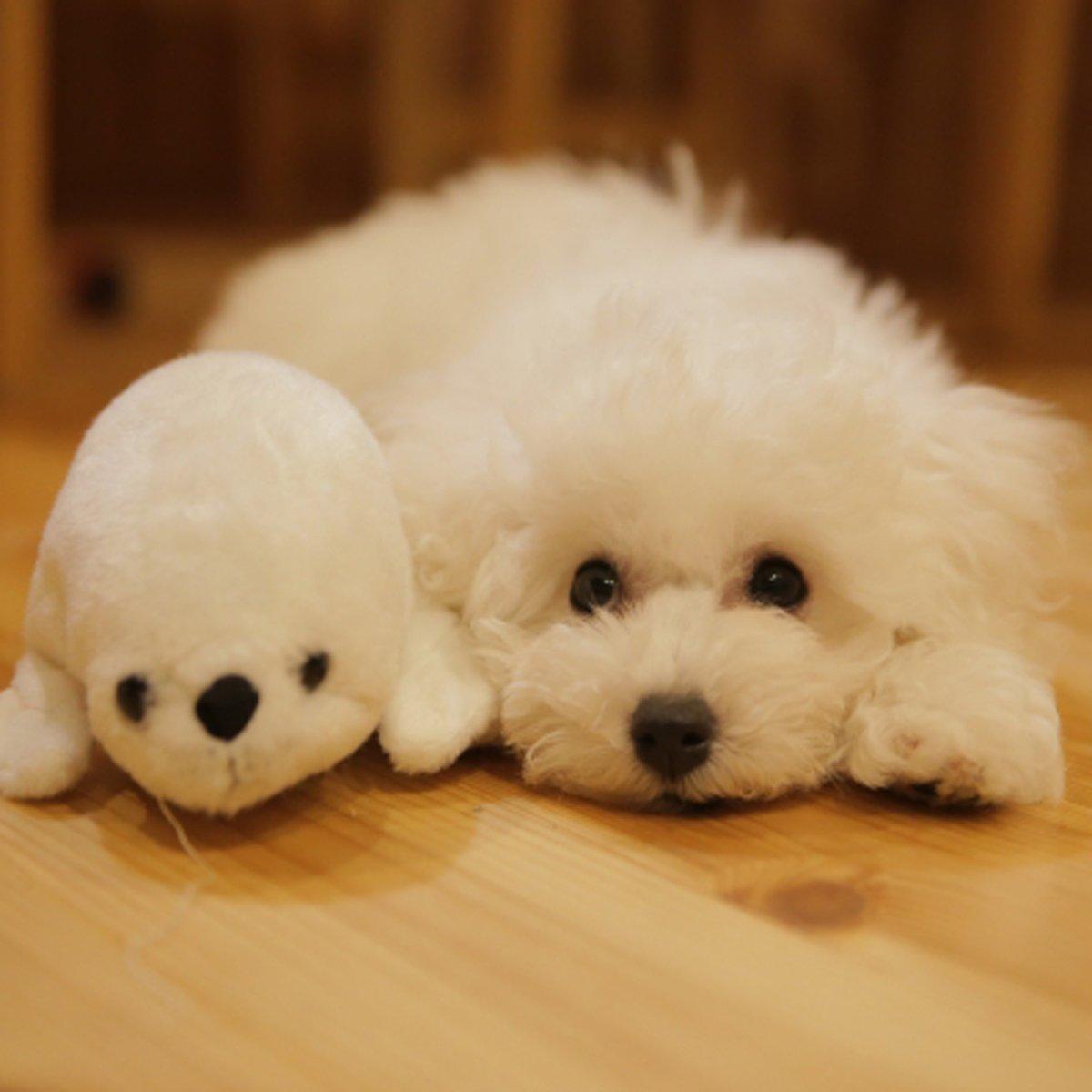 かわいいわんちゃん♪ #ハニーペット #HONEYPET #honeypet #犬 #ふわもこ部 #愛犬 #わんこ #いぬすたぐらむ #いぬ #ペット #犬のいる暮らし #ワンコ #イヌ #いぬのきもち #こいぬ #dog #dogsofinstagram #puppy #pet  #instagood #follow #followme https://t.co/yZhHYmdKft