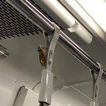 こんな距離で鳴かれると耳へのダメージも大きそう!電車に乗車中のセミが話題に!