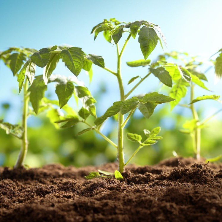 The degradation of the 🌎's soils has released about 78 billion tonnes of carbon into the atmosphere!  Yet, healthy #soils are one of our biggest allies against #climatechange!   We need to protect our soils!   #ClimateAction #IYPH2020