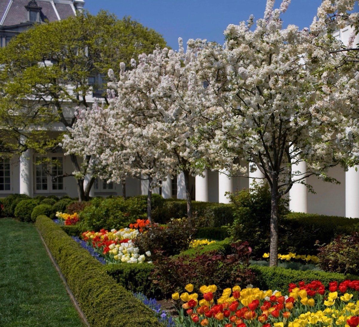 Before and after photographs of newly renovated White House Rose Garden: https://t.co/K8gdCTaY50