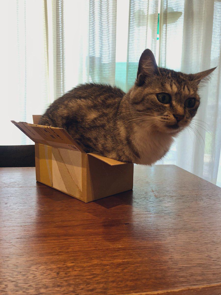 從箱子裡跳出來的貓 EgEy-G5VAAEP7-G