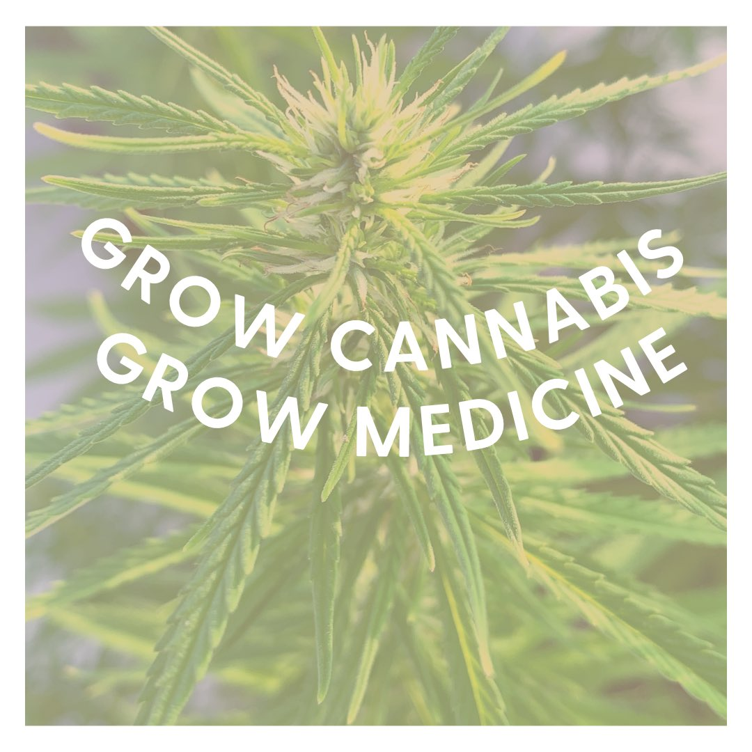 Cultiva #cannabis , cultiva medicina🥰🌿  👉🏼https://t.co/jT9eAtg1yB #FelizDomingo #cannabisindustry #CannabisCommunity #420community #420FromHome #Mmemberville #psycodelican #cannabisjournal #cannabicwoman #CannabisMedicinal https://t.co/U7kKQ3d65V