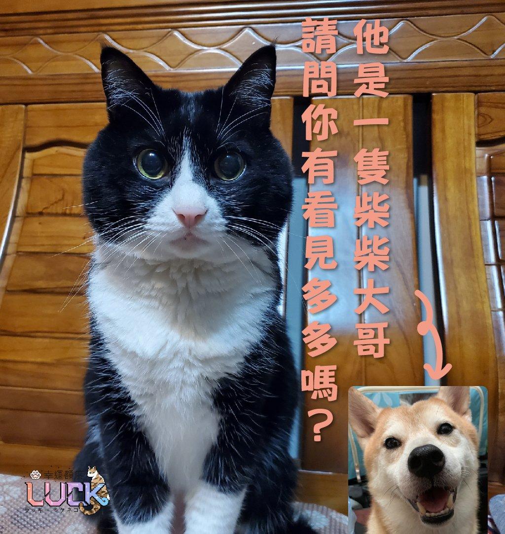 """皆さんに協力したいことです。 台湾の""""多多""""という柴犬がなくなった 場所は台湾の新北市、もし台湾の友達がいる人、伝えてほしいです。 #拡散希望 #拡散希望RTおねがいします  #拡散RT希望 https://t.co/VhjvRFWtXC"""