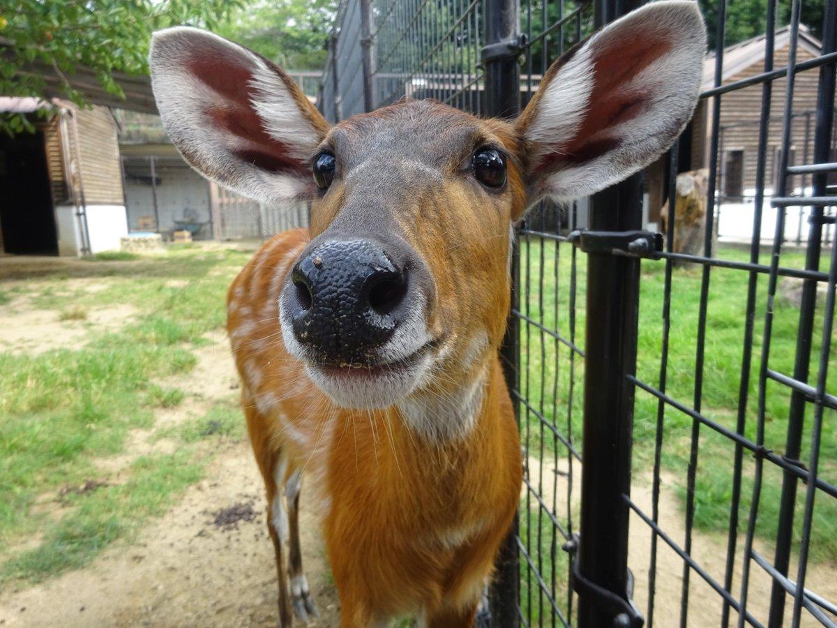 科 動物 シタツンガ は 何 の