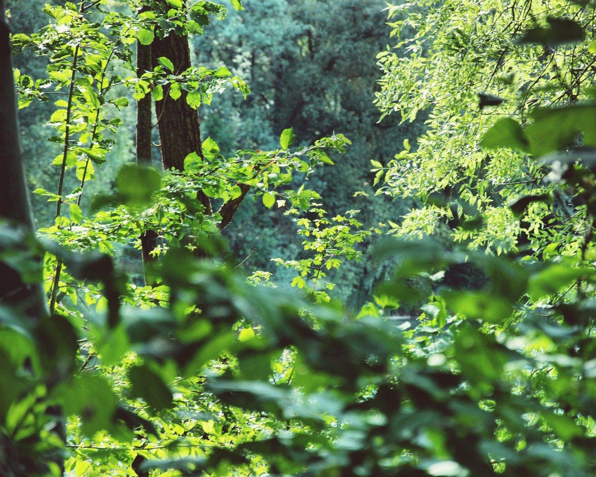 #earthovershootday  Wir brauchen nach wie vor einen Wandel, eine echte #Transformation, unserer #Lebensweise!  Damit unsere Erde das gemeinsame #Haus bleibt, für uns und alle Menschen heute und morgen! • #natur #environment #zuversicht #ausliebezummenschen #papst #laudatosiweek https://t.co/XO5H8gI5cP