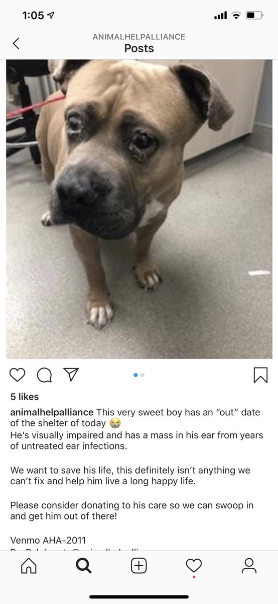 Quick Note: Thanks to those who have booked me on @BookCameo, I literally used the $$ to save a dog from euthanasia on his 'out' day on Friday. Fred is now getting vet care & seeking a home soon (Vegas area)! THANK YOU! ❤️🏁 #SaveThemAll https://t.co/q9nwMEOiRI