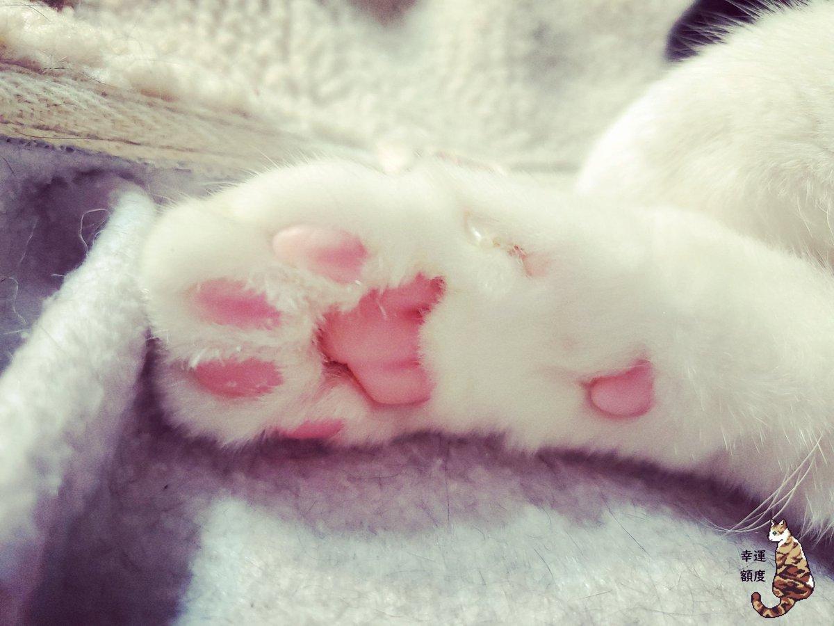 皆さんの肉球見たいです。😍😍 #幸運額度 #cat #taiwan #猫 #猫好きさんと繋がりたい #猫好き #猫写真 #猫のいる生活 #インスタ映え #貓 #台灣 #台湾 #REO #レオ #ハチワレ #ハチワレ猫 #賓士貓 #Tuxedo #雷歐 #肉球 https://t.co/u9drW3pgvy