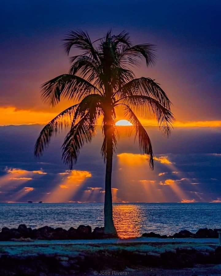 #Florida #USA #photography #NaturePhotography #naturelover #beautifulworld #Tourism https://t.co/7tVaWpo8wN