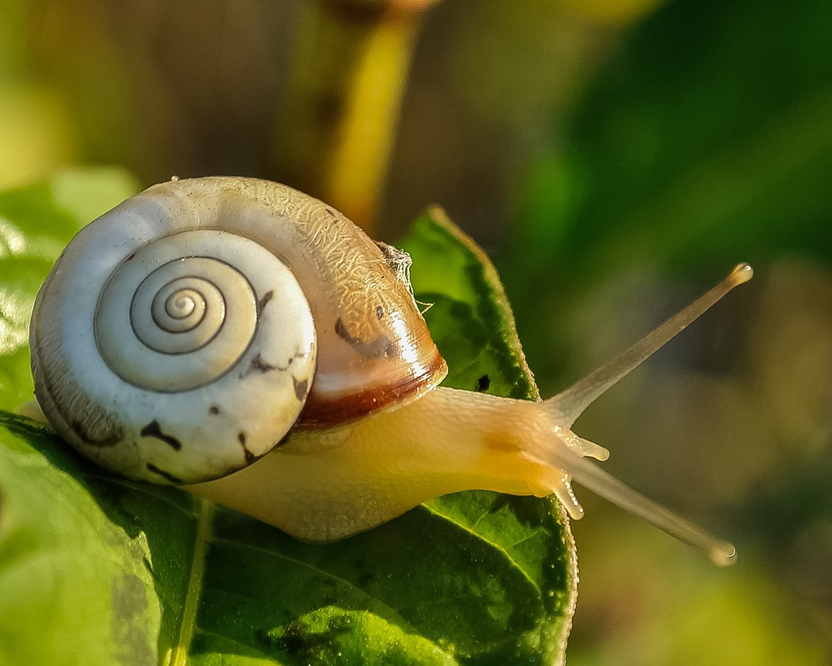 #TriviaTuesday  #DidYouKnow a snail can sleep for up to 3 years? Talk about getting your beauty sleep! Follow the slime trail to find out more about snails at this link: https://t.co/p2h42tdmsk https://t.co/d4rxmZA2a2