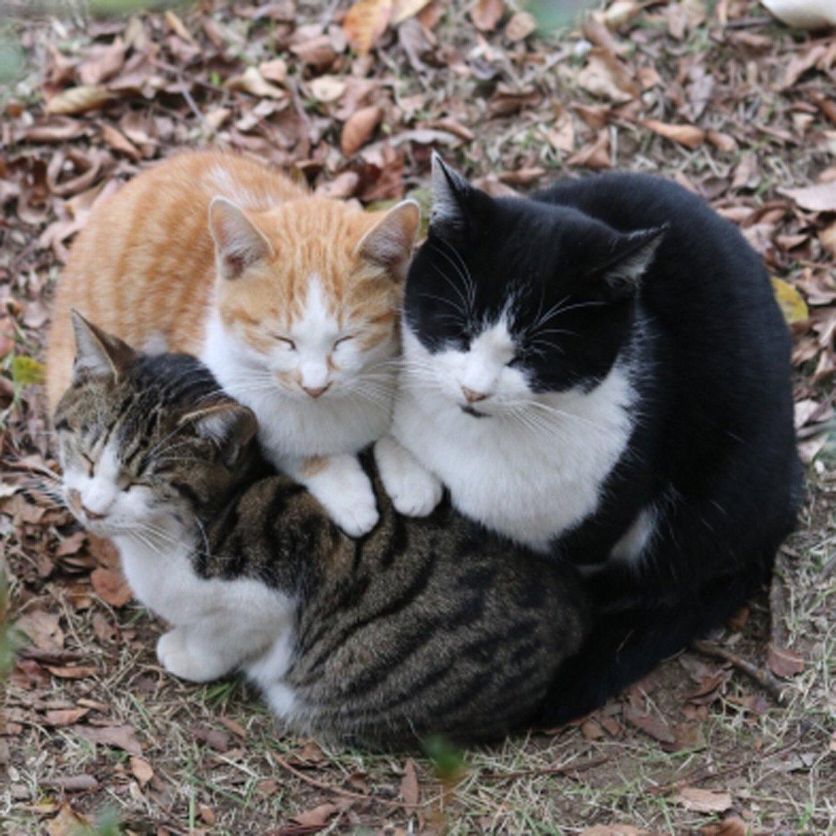かわいいにゃんこ♪ #ハニーペット #HONEYPET #honeypet #猫 #ねこ #ねこ部 #にゃんすたぐらむ #にゃんこ #子猫 #ネコ #ねこのいる生活 #ねこのきもち #ねこのいる暮らし #kitty #catstagram #petstagram #instacat #meow #instagood #follow #followme https://t.co/bdNyU3NM5a