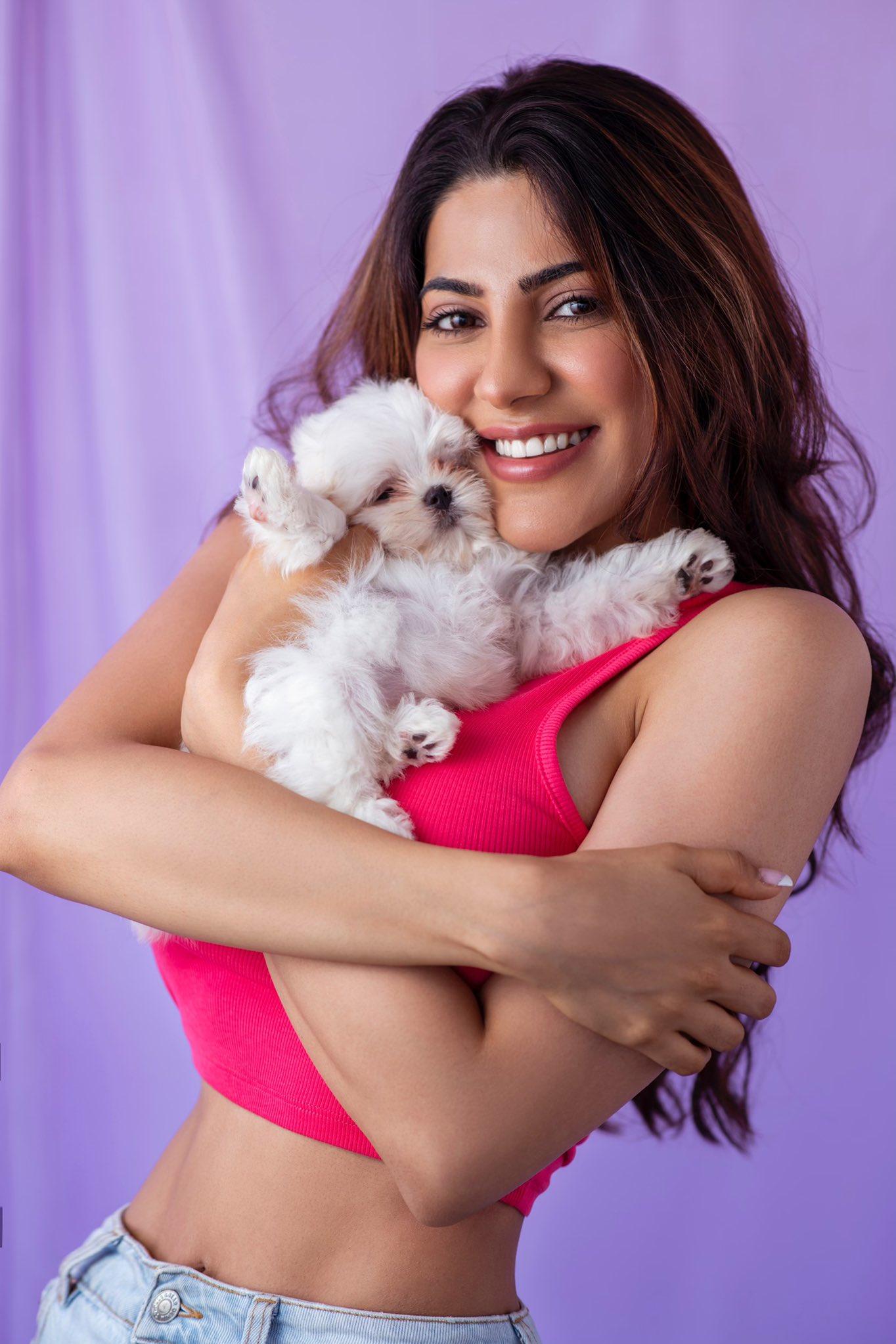 """Nikki Tamboli on Twitter: """"HAPPY INTERNATIONAL DOG DAY!!✨🐾 #puppylove # puppy #dogoftheday #teddybeardog #maltese #maltesepuppy #internationaldogday #unconditionallove ♥️♥️♥️♥️… https://t.co/cdxTLhpVyT"""""""