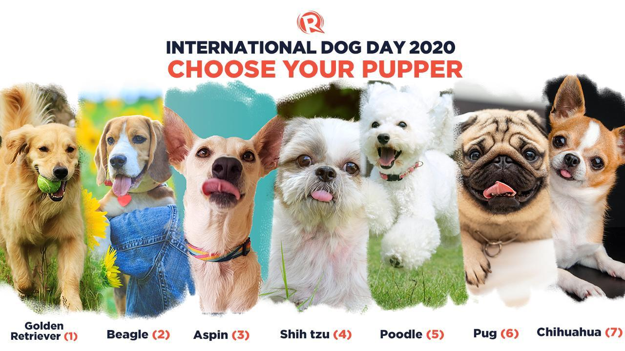 International Dog Day - 26 August  IMAGES, GIF, ANIMATED GIF, WALLPAPER, STICKER FOR WHATSAPP & FACEBOOK