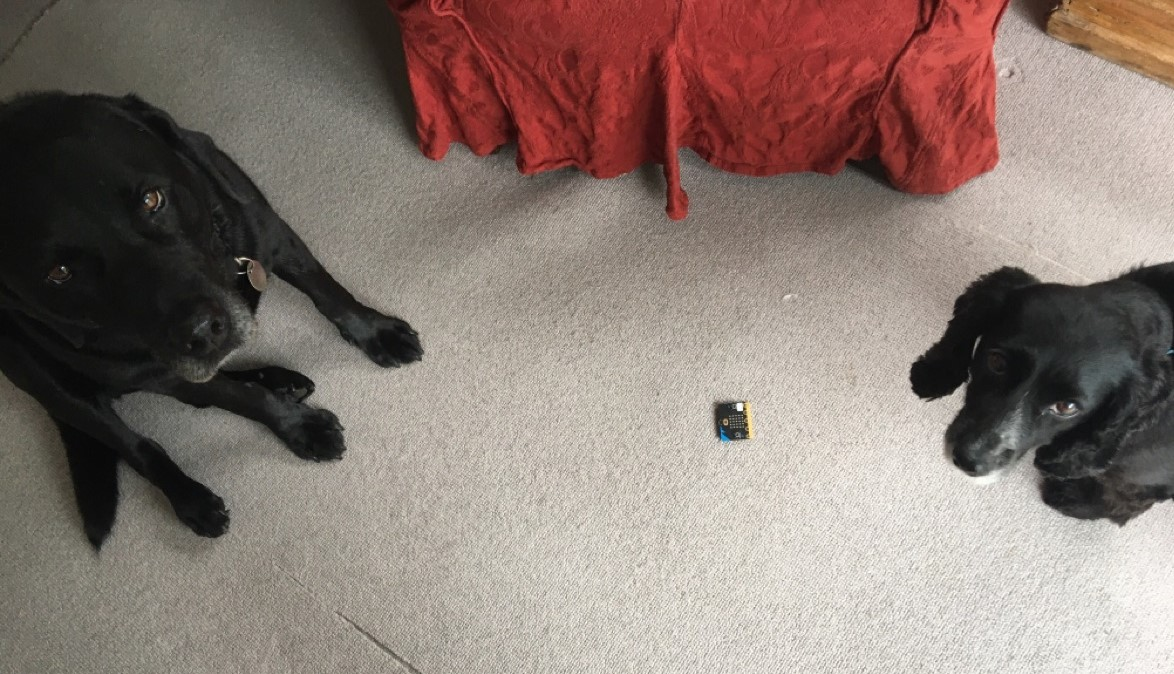 ...not forgetting Billy and Smudge with their #microbit (even though they don't seem impressed)