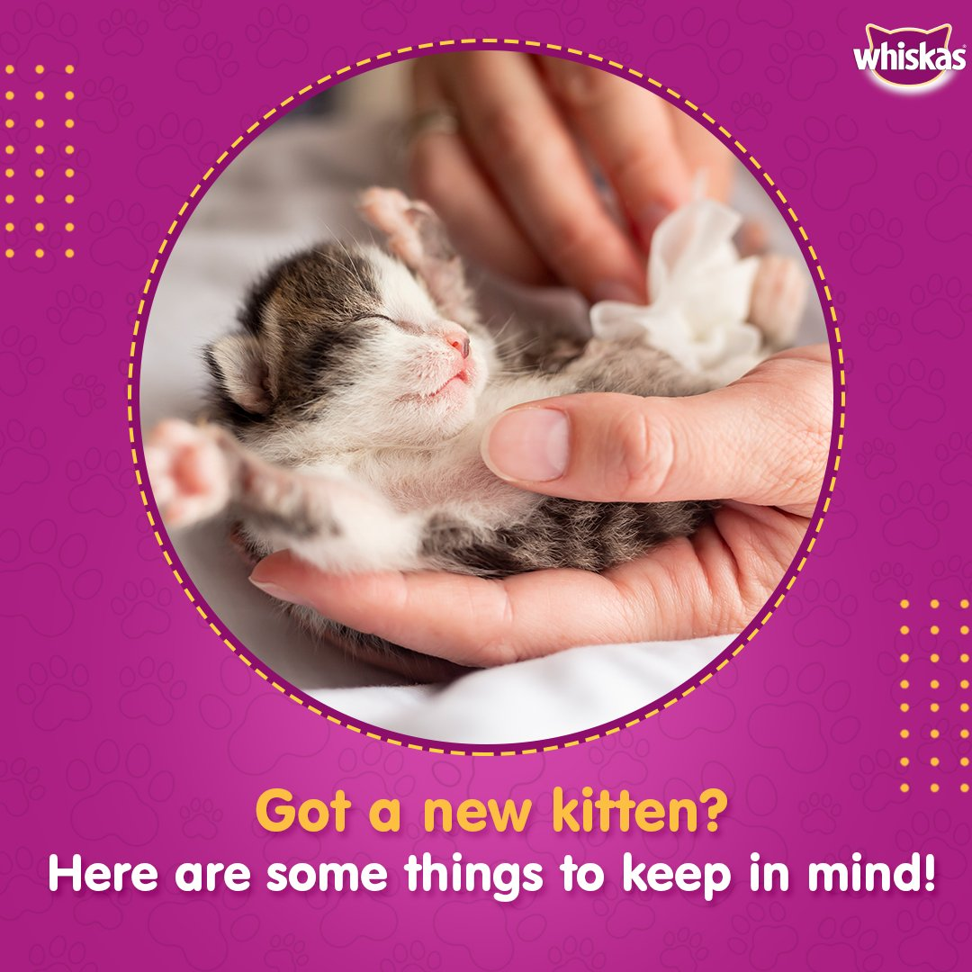 Being a new kitten parent can get you worried about fulfilling their nutritional needs. Ensure they get awholesome meal with the range of #Whiskas kitten food.  Buy Now- https://t.co/7ituKUhroJ  #WhiskasIndia #FeedTheirCuriosity #CatsOfInstagram #Catstagram #Cat #Caturday https://t.co/dgMkcBGCZ4
