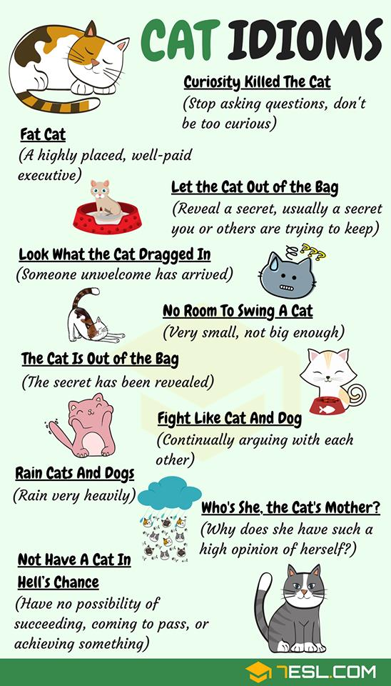 English At Large On Twitter English Learners Are You A Dog Person Or A Cat Person Whichever You Prefer We Have Idioms For You