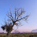 Image for the Tweet beginning: El árbol de las #Garzas