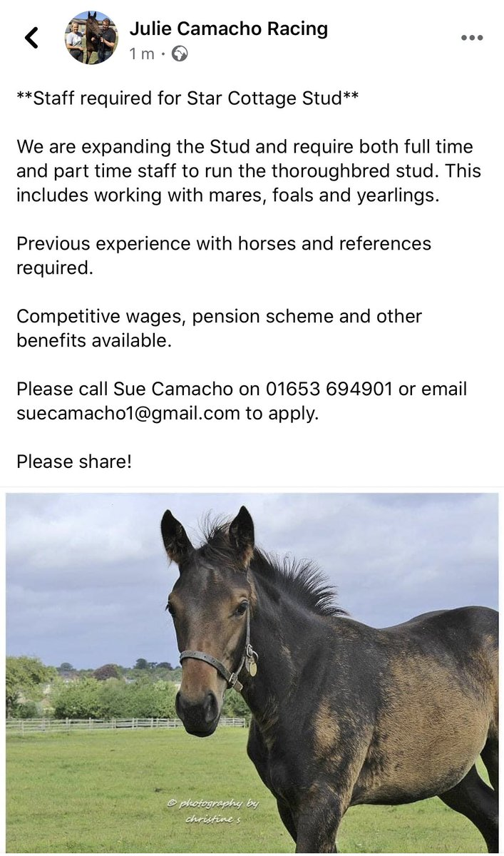 **Staff required for Star Cottage Stud**. Please see below for info.