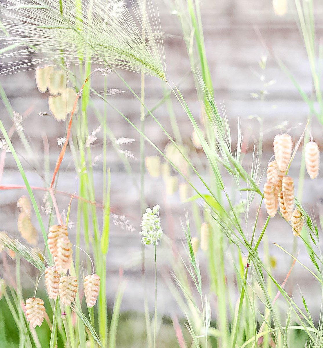 Do you want to contribute to new understanding of #grass ecology and evolution? Come help us build a new #phylogeny of the 'cool season grasses'! #postdoc available: https://t.co/K4jedgPQgN(1/n) https://t.co/AeZx7Dj5TJ