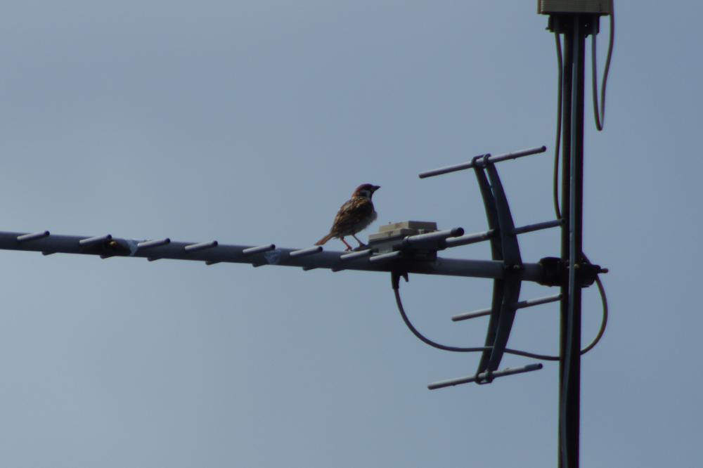 今日の成果。 なんだろ・・・ウチの近所に来ると盗撮されると鳥世界で噂になっているんだろうか・・・。 全てトリミング有。 3枚目は本来三脚使ってとる夜景モードで手振れたら、面白いものになった😅  #PENTAX #PENTAX_K_70 https://t.co/hRIO70vlQX