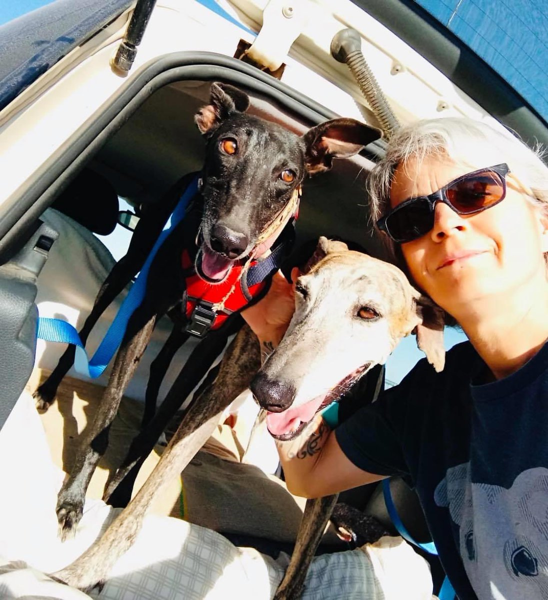 Guess who left today?💥Finally Azabache & Montaña have gone to a home together here in Spain. Both leish positive dogs & Azabache has issues from when she had distemper as a puppy so we are delighted 2 hard to rehome dogs have a chance 🥰 From Street life to sweet life 🌟